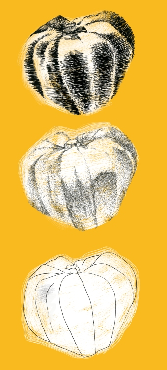 Squash, 3 ways, pen and ink and digital, 2016
